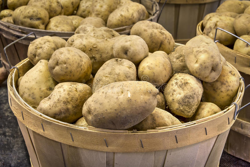 Potatoes in Basket. Potatoes, piled into a natural wood basket, are on sale at a produce market royalty free stock image