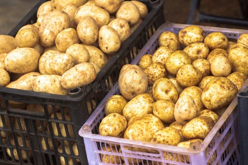 Potatoes on basket stock photo