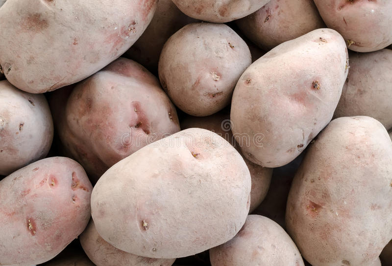 Potatoes close up. The reaped crop of potatoes stock image