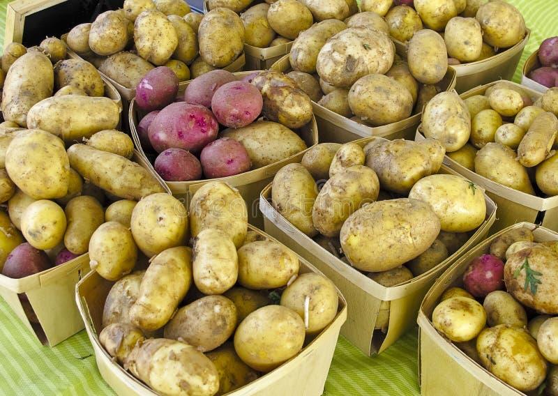 Potatoes at Farmers Market royalty free stock photo