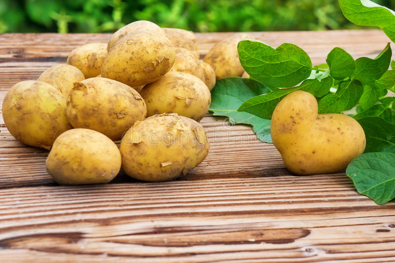 Potatoes, fresh harvested royalty free stock photos