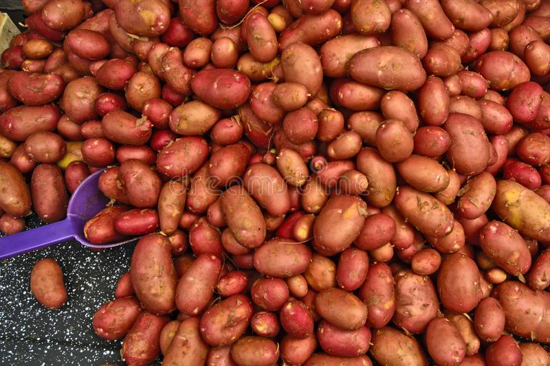 Potatoes in the market stock images