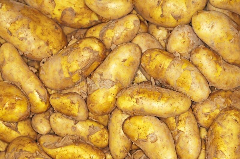 Potatoes new harvest
