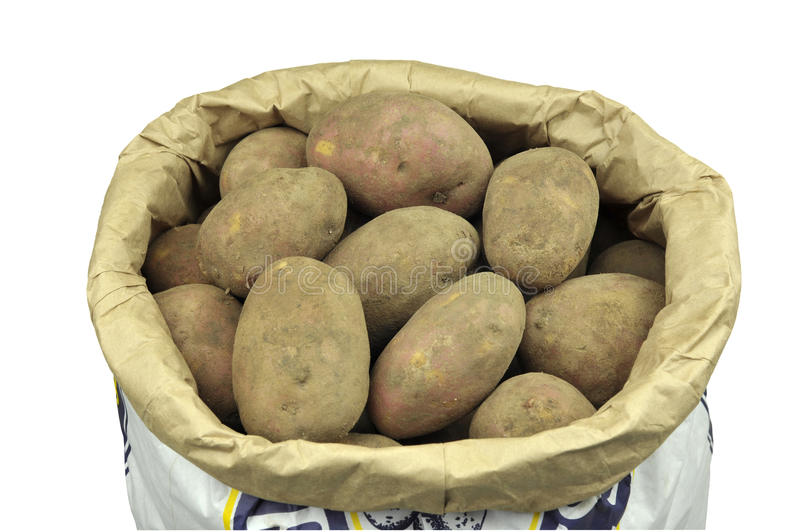 Potatoes. Paper sack of unwashed maincrop potatoes variety Red Mozart, Isolated on white stock images