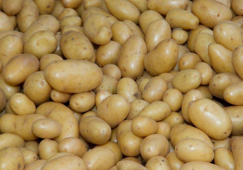 Potatoes Raw Vegetables Food Stock Photo