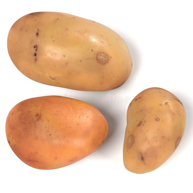 Potatoes. Realistic 3d render of potatoes stock illustration