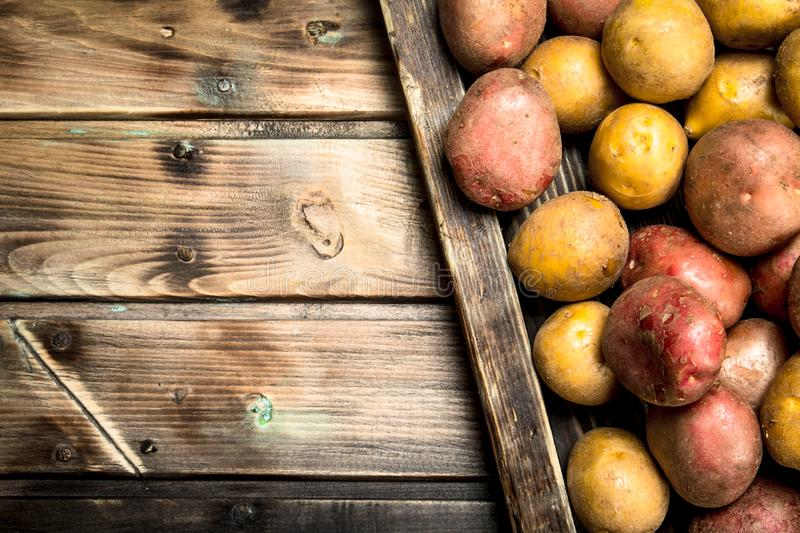 Potatoes on a wooden tray. On wooden background royalty free stock images