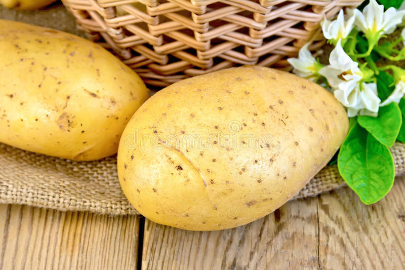 Potatoes yellow with flower and basket on board stock photography