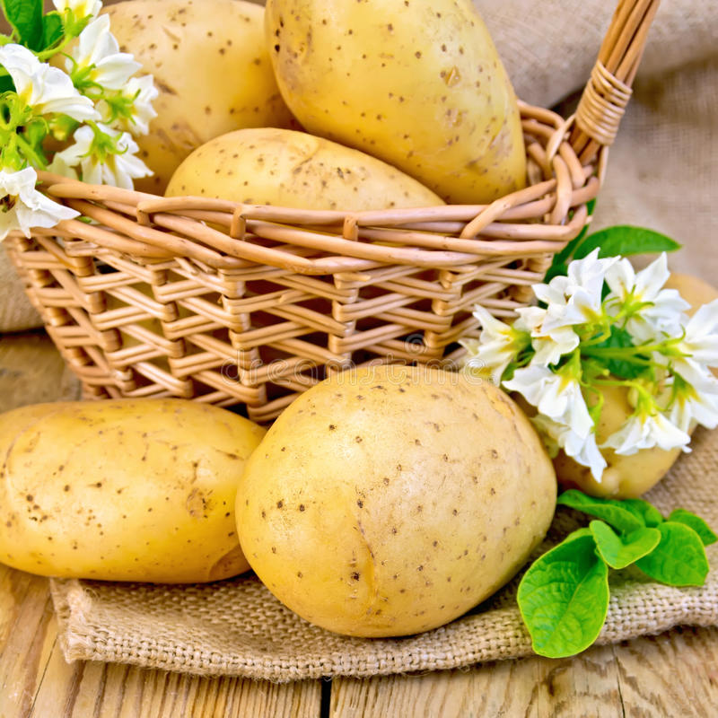 Potatoes yellow with flower and basket stock image