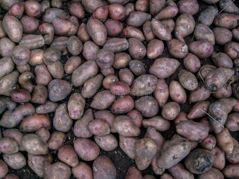 Potatooo lizenzfreie stockfotografie