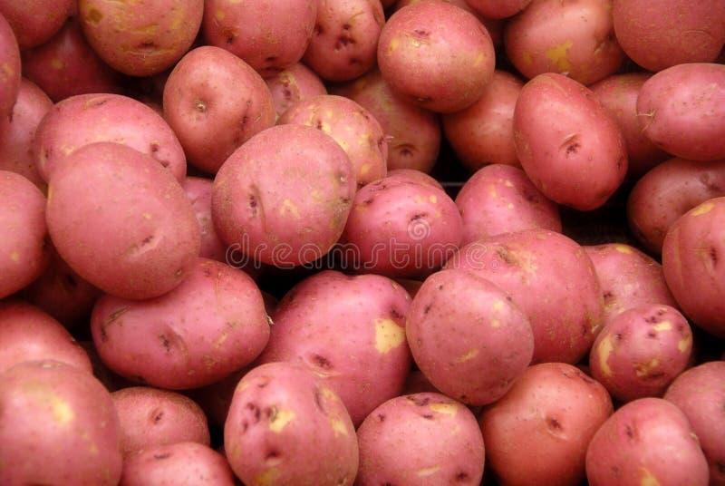 potatos красные стоковые фото