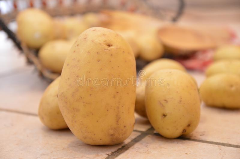 Potatos agricolture warzywa zdjęcia stock