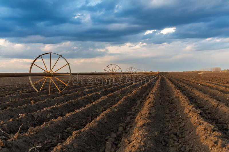 Potatu field with irrigation system, right after seeding stock photo