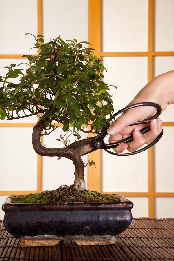 Potatura dell'albero dei bonsai immagini stock libere da diritti