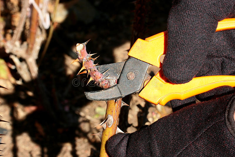 potatura di autunno immagine stock libera da diritti