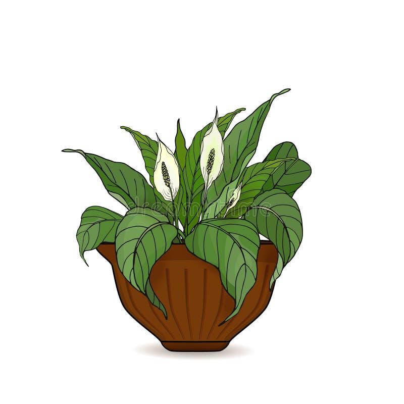 Pote con el Anthurium en conserva de las flores aislado en el fondo blanco Ilustraci?n del vector ilustración del vector