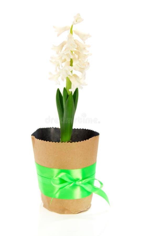 Download Pote Con Un Jacinto, Arco Adornado Foto de archivo - Imagen de hoja, flora: 41921260