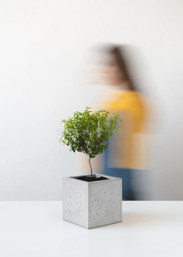 Pote concreto con un pequeño árbol fotos de archivo