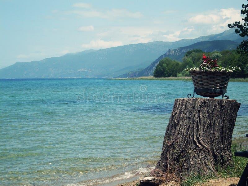 Pote de flores en la costa del lago Ohrid imagenes de archivo