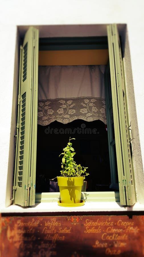 Pote de la albahaca en la ventana, isla de Cícladas, Grecia foto de archivo libre de regalías