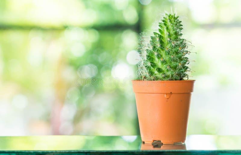 pote de la decoración del cactus en sitio fotos de archivo