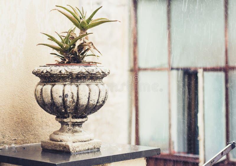 Pote de piedra decorativo para las plantas en la terraza de un edificio histórico en Catania, Sicilia, Italia, día lluvioso imagen de archivo libre de regalías