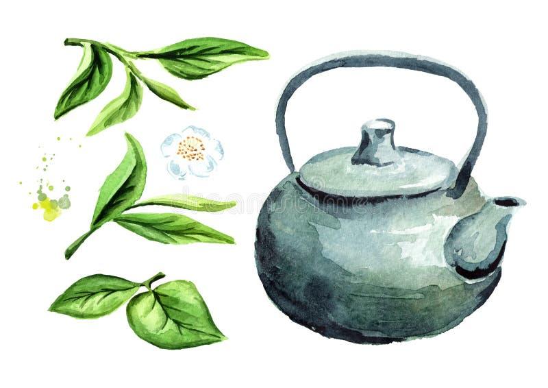 Pote del té con las hojas de té verdes fijadas Ejemplo dibujado mano de la acuarela, aislado en el fondo blanco ilustración del vector