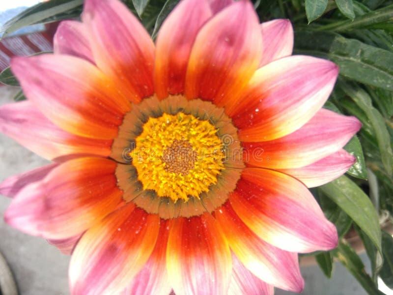 Pote hermoso del jardín de la planta verde de la naturaleza de la flor imágenes de archivo libres de regalías