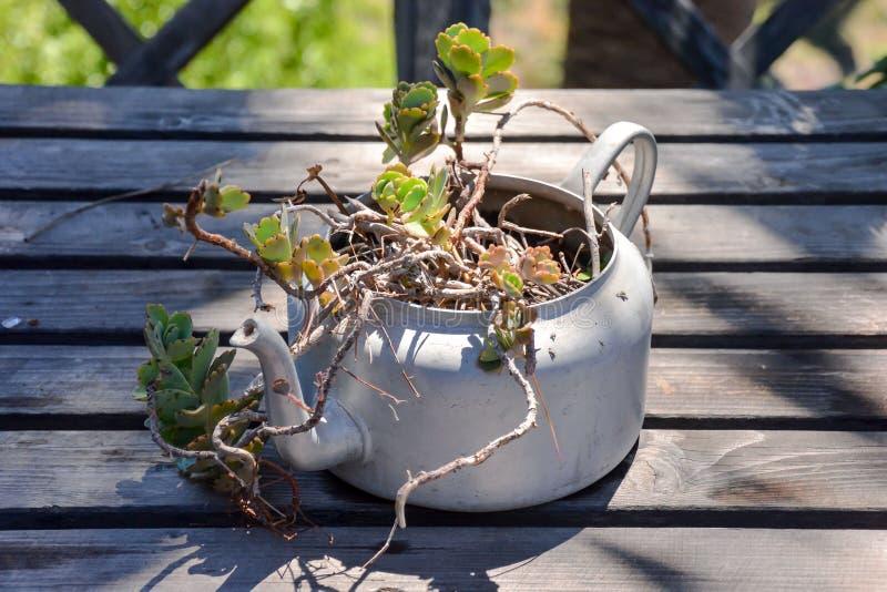 Pote inusual extraño de la planta imagenes de archivo