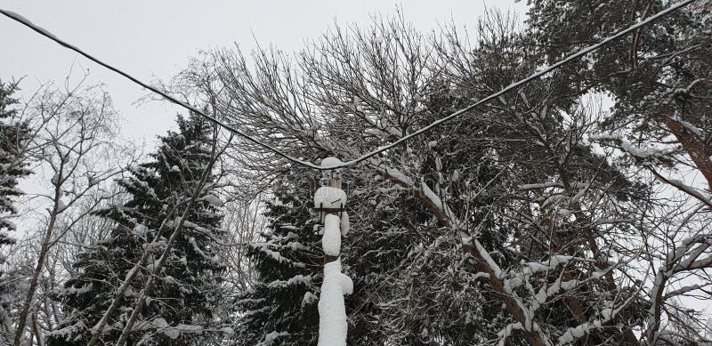 Poteau électrique dans la forêt photo stock