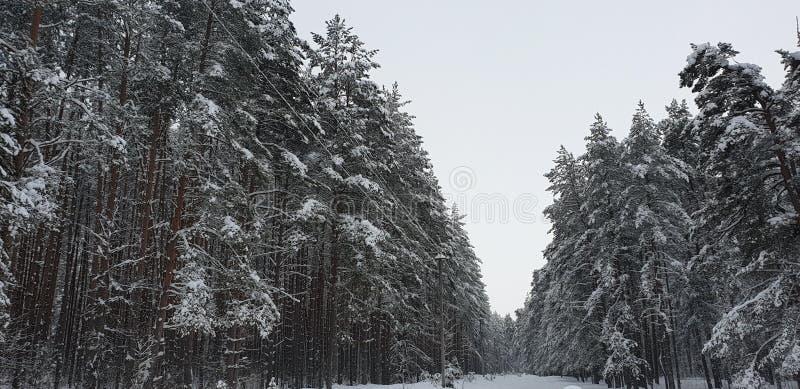 Poteau électrique dans la forêt photographie stock