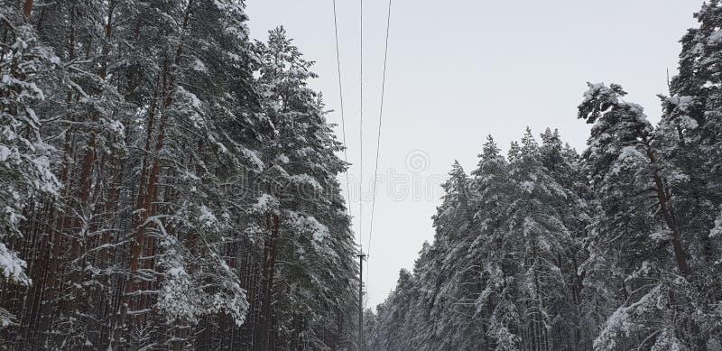 Poteau électrique dans la forêt photos stock