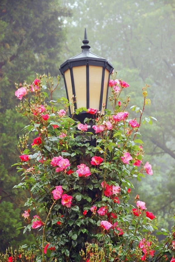 Poteau et roses de lampe photographie stock