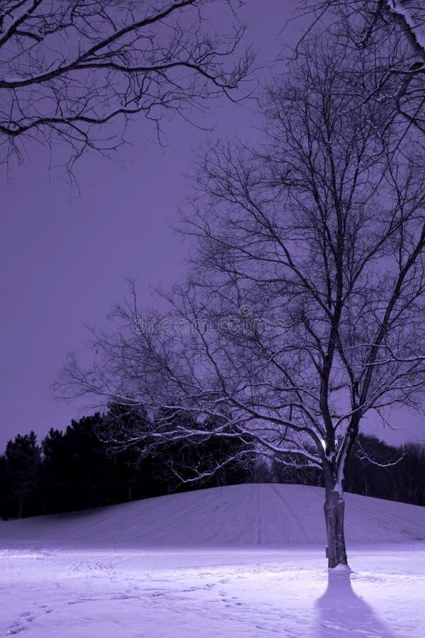 Poteau léger derrière l'arbre, scène de l'hiver photo stock
