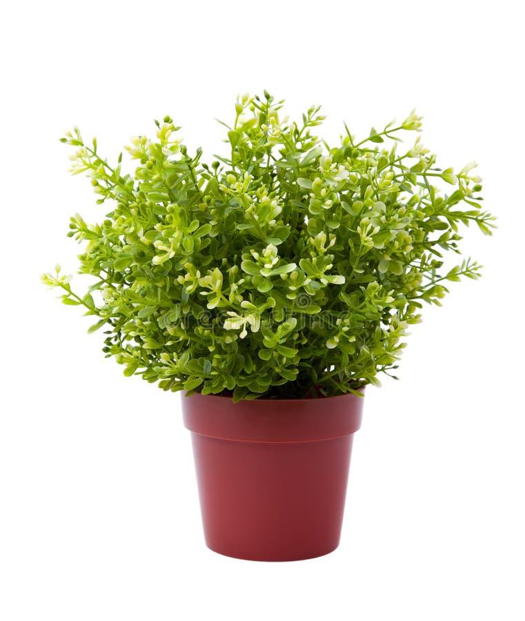 Potenciômetro da planta fotografia de stock royalty free