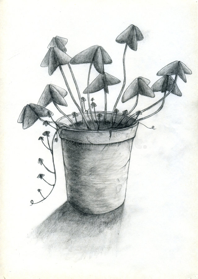 Potenciômetro De Flor Fotografia de Stock Royalty Free