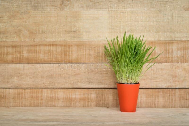Potenciômetro de flor alaranjado com verdes nos suportes da tabela em um claro - fundo de madeira marrom da parede Copie o espa?o imagens de stock royalty free