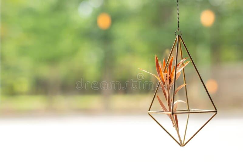 Potenciômetro de flor decorativo de suspensão perto da janela imagem de stock royalty free