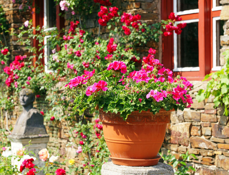 Potenciômetro de flor no jardim ensolarado foto de stock royalty free