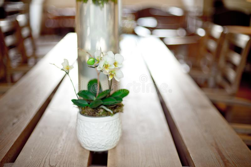 Potenciômetro de flores decorativo com a orquídea branca de florescência foto de stock royalty free