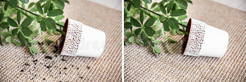 Potenciômetro virado com houseplant fotografia de stock