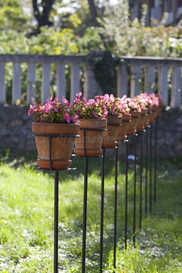 Potenciômetros da planta verde com violetas no jardim imagem de stock