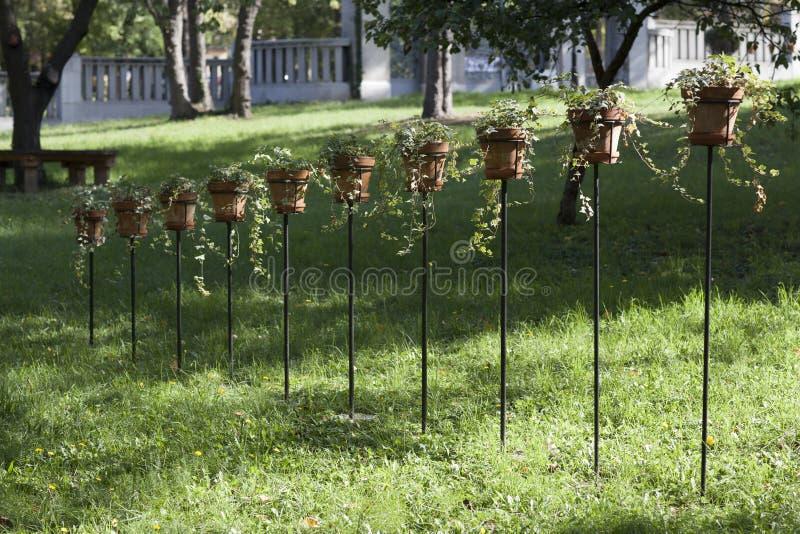 Potenciômetros da planta verde no jardim fotografia de stock