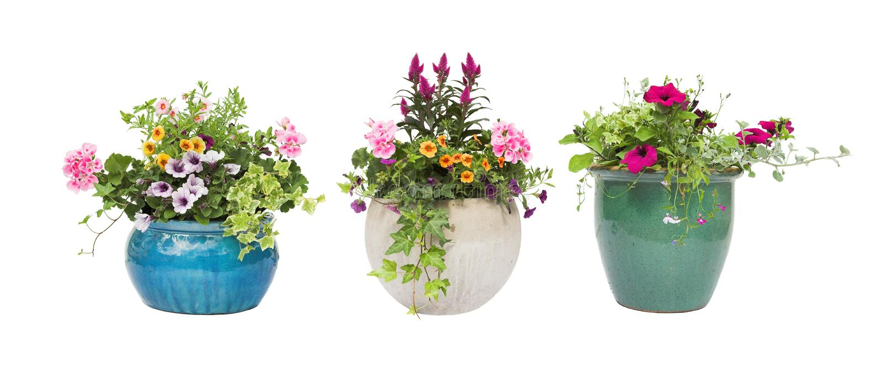 Potenciômetros de flor do verão da mola isolados no branco fotos de stock royalty free