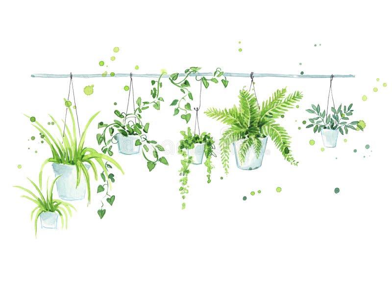 Potenciômetros de flor de suspensão, elemento do design de interiores ilustração do vetor