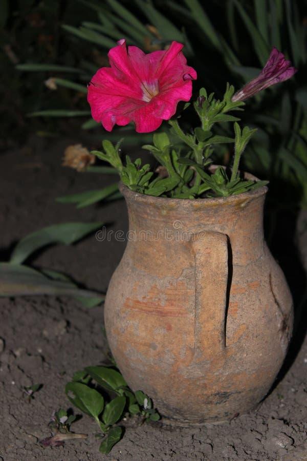 Potenciômetro de flor foto de stock