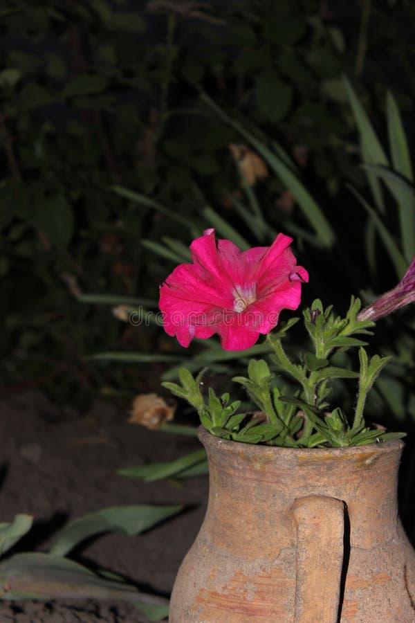 Potenciômetro de flor imagem de stock royalty free