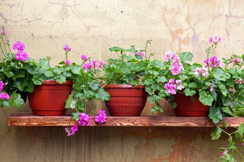 Potenciômetro de flor em uma prateleira na parede fotos de stock royalty free