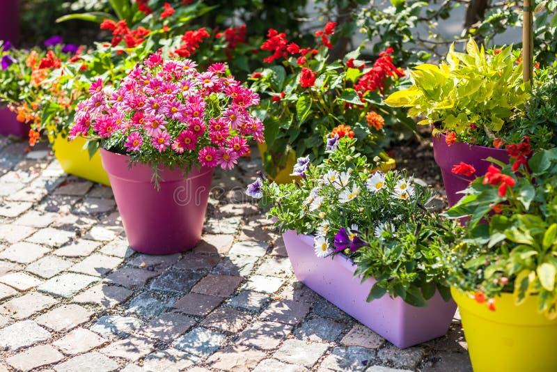 Potenciômetros de flor fotos de stock royalty free