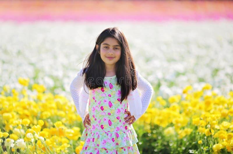 Potenciômetros de flor fotos de stock
